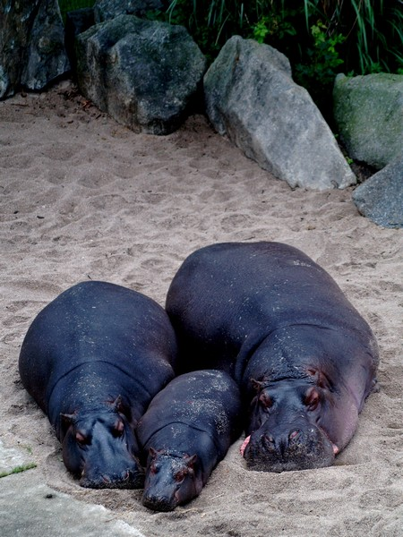 praskie zoo