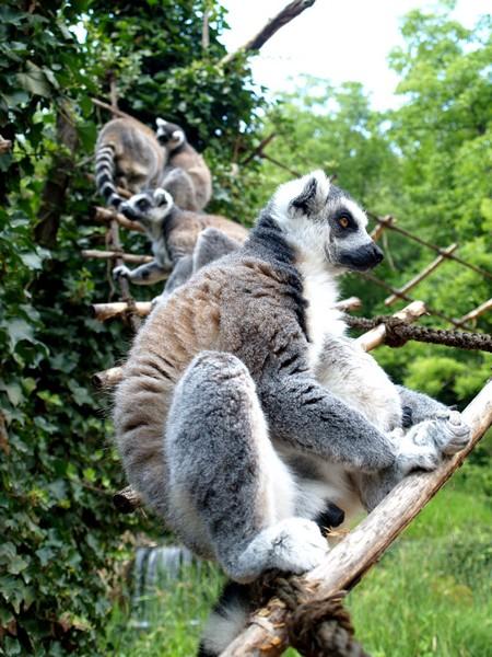 praga zoo