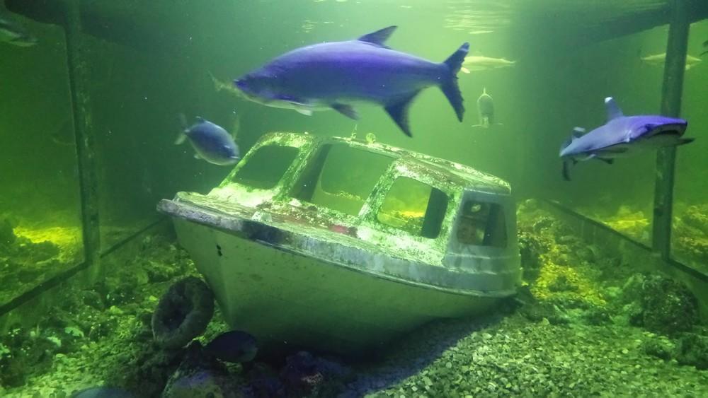 oceanika - akwarium Świętokrzyska Polana - Chrusty