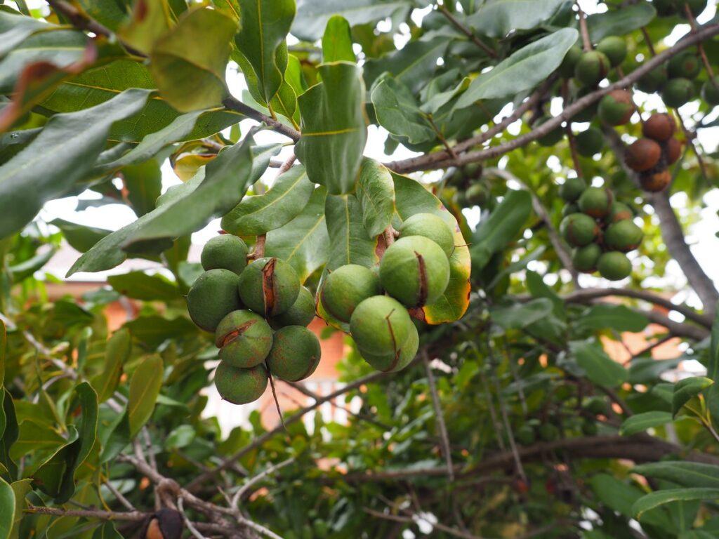 Owoce w Australii, których nie znasz