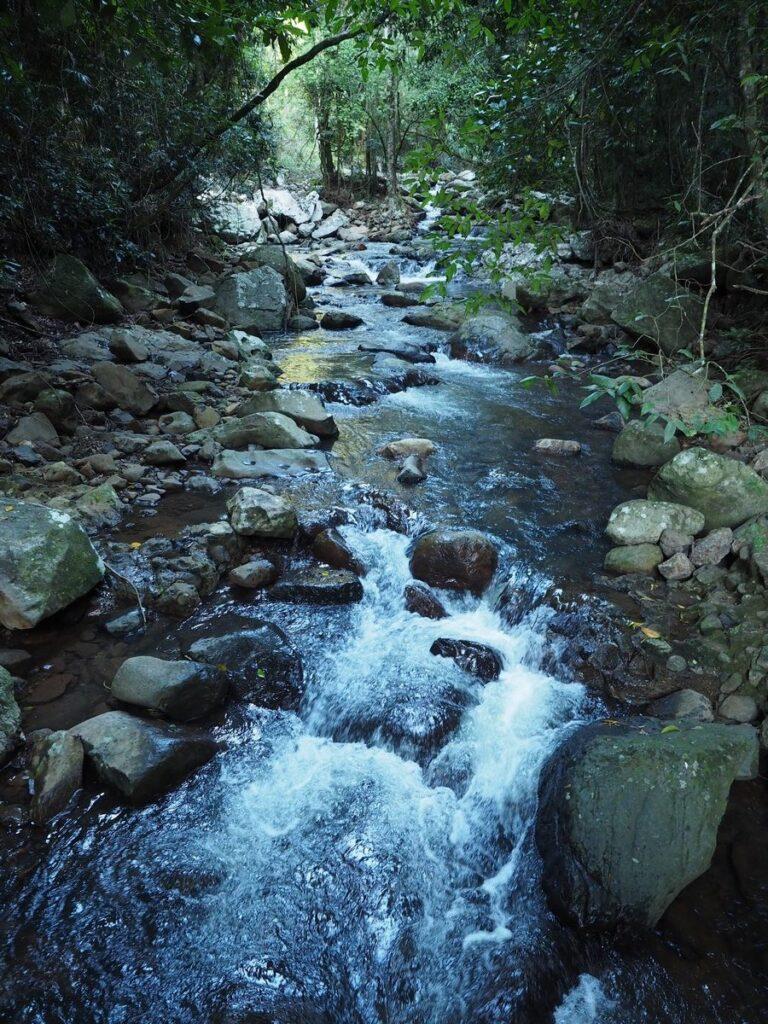 Park Narodowy Springbrook