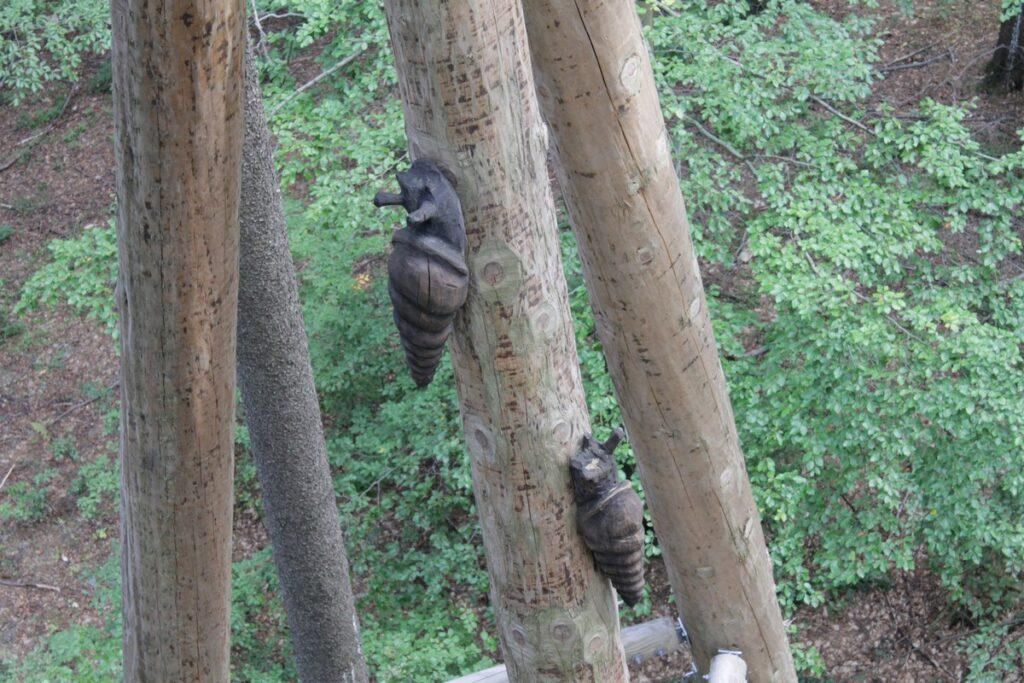 Spacer w koronach drzewa - Karkonosze
