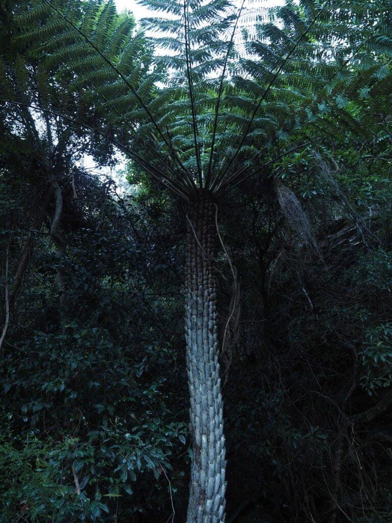 Najbardziej stroma kolejka świata