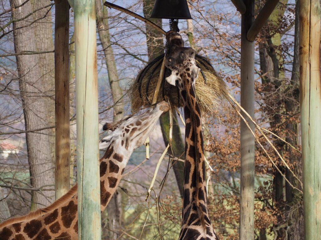 Zoo w Zlinie