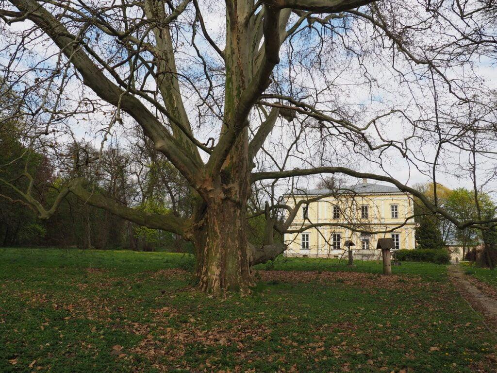 Pałac w Chrobrzu