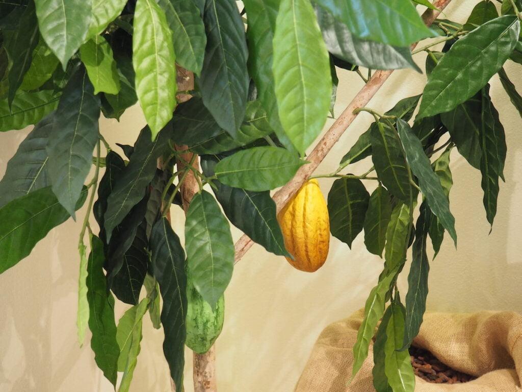 czekoladziarnia Troubelice