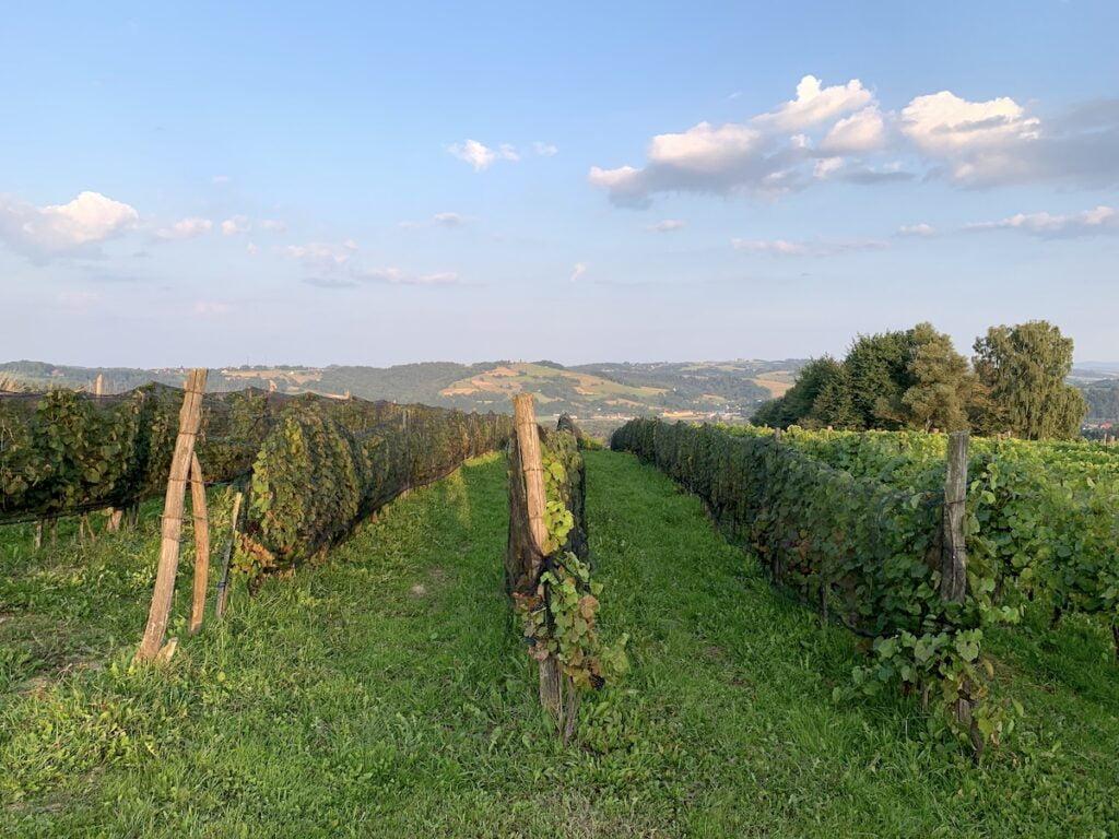 Tarnowskie winnice